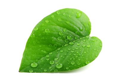 greenleaf400wT1a
